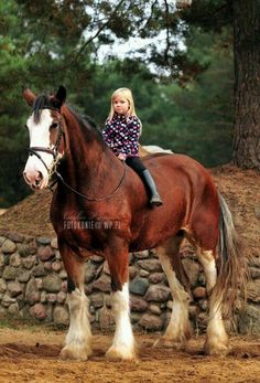 Don't be scared to ride such an enormous horse, because they're sweet and awesome gentle giants to ride on!