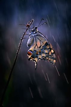 Butterfly in the rain by Antonio Grambone