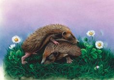 hedgehog colourful drawings and paintings - Google Search