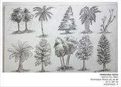 Image result for types of trees drawing