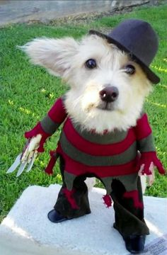 Doggy Krueger, if I was crafty enough I'd make this for angus!