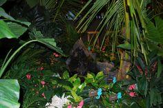 philadelphia flower show 2012 | 6822842908_730fdfacae_z.jpg