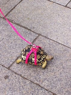 My Turtle would make me run if I was suppose to do this ! lol