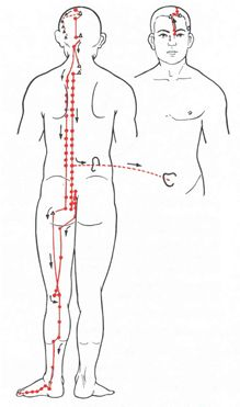 Blasenmeridian Spirituality, Acupuncture, Interesting Facts, Health, Spiritual