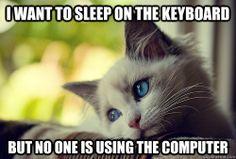 first world cat problems :D