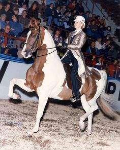 Planet Hollywood...American Saddlebred And this is where I would like to be... Want to get back into showing.