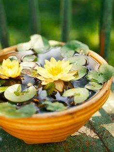 Place hardy miniature waterlilies, such as these Nymphaea pygmaea 'Helvola', in a yellowware bowl.