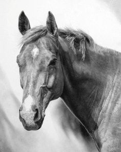 images pencil drawings of horses | Horse Pencil Drawings