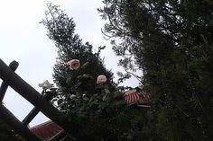 God Is, Twitter, Dandelion, Flowers, Plants, Blog, Dandelions, Blogging, Plant