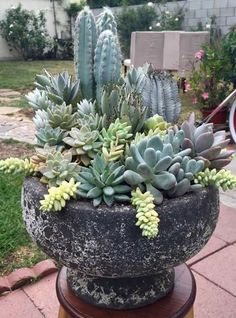 Cactus Arrangement for your backyard Succulents Tall Succulents, Succulents In Containers, Container Plants, Container Gardening, Succulent Landscaping, Succulent Gardening, Planting Succulents, Garden Landscaping, Landscaping Ideas