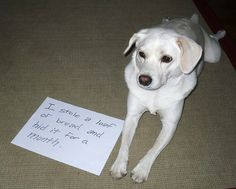 25 pictures of public dog shaming