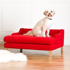 A lounger for the dog who always wants to look like she's posing for a portrait.