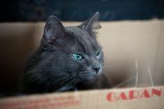 #cat #box