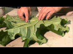 Leaf Casting part 1 - For more info go to DIYmolds.com look for Thegris. - YouTube
