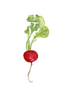 Small Radish number three  original watercolor painting, red and green, Botanical painting, Kitchen art, minimalist, farmers market
