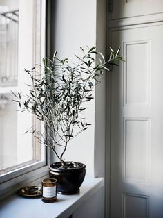 misc ideas my scandinavian home: A calm and elegant Finnish home Windowsill Decoration, Home Decor Trends, Home Decor Inspiration, Faux Olive Tree, Indoor Olive Tree, Minimal Home, Scandinavian Interior, Sweet Home, Planting Flowers