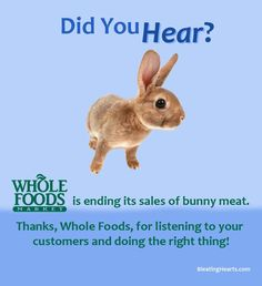 Big win for rabbits! Whole Foods will no longer be selling rabbit meat House Rabbit Society, All Gods Creatures, Whole Foods Market, Happy Animals, Animal Welfare, Vegan Life, Bunny Rabbit, Animal Rescue, Whole Food Recipes