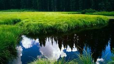 download free hd backgrounds widescreen nature