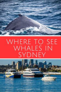 Sydney is a fantastic spot to see whales in action with over 30 land based vantage points and dozens of great whale watching cruises available. So how do you choose the best? Well you ask a local :-) Travel Travel Travel Trip Travel Visit Australia, Sydney Australia, Australia Travel, Western Australia, Australia Holidays, Melbourne, Brisbane, Places To Travel, Travel Destinations
