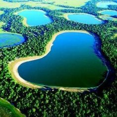 Pantanal, Brazil (one of the world's largest tropical wetland areas)