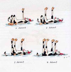 Yoga-Kühe :)