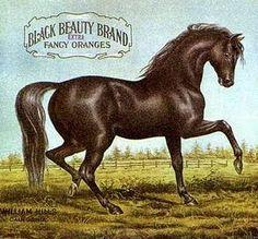 free clipart vintage black beauty