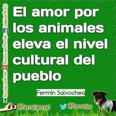 El amor por la mascotas se une al de nuestra familia  amigos  etc #perrotips