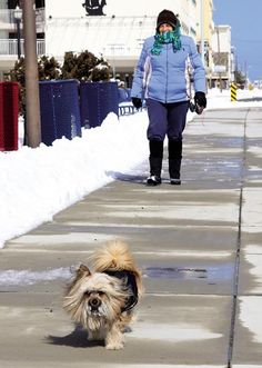 Lorraine McCullen of Wildwood Crest walks with her dog Angel whose face is covered with snow after romping around.