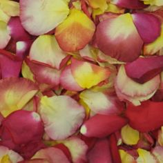 GrowersBox.com: Flowers: 3,000 Freeze Dried Rose Petals Festive Blend: Rose Petals $99.99