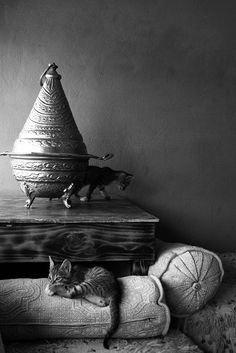 Cats in Morocco shot by Max