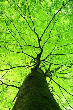 Just Pinned to WinterGreenDream: tree trunk. green leaves. exquisite shapes. http://ift.tt/2o68rda