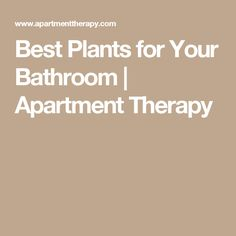 Best Plants for Your Bathroom | Apartment Therapy