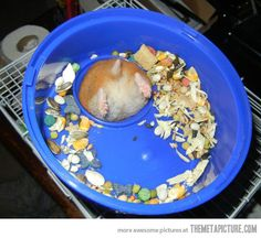 First world hamster problems…