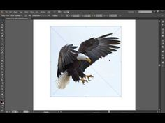 Image Trace in Adobe Illustrator CC - YouTube