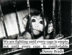 Until every cage is empty.