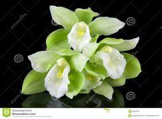Resultado de imagen para orquideas hermosas para fondo de pantalla