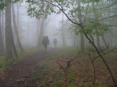 Hikers walk into a cloud.  Priest Mountain, Appalachian Trail ~noworries