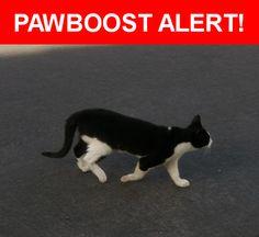Please spread the word! Princess was last seen in Las Vegas, NV 89166.    Nearest Address: Near Sumatra St & la Vereda Ave