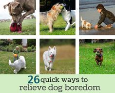 26 quick ways to relieve dog boredom. Dogs have been bred to work alongside humans; they can get easily bored which leads to destructive behaviors. With a