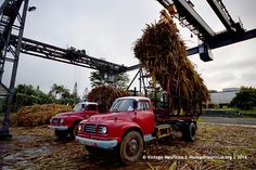 Old Red Bedford Trucks Unloading 3 – Mon Desert Alma – Mauritius – Father and Son Bedford Truck, Harvest Season, Father And Son, Mauritius, Cars And Motorcycles, Monster Trucks, Deserts, Red, Beauty