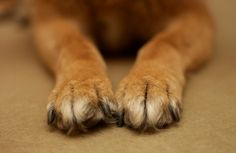 How To: Trim Your Dog's Nails