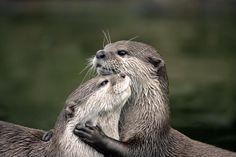 14 Dieren die elkaar een dikke knuffel geven | Zoo | Upcoming