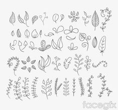 46 hand-painted flowers and foliage vector