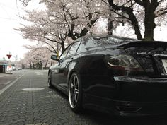 My previously owned Toyota MarkX GRX120 under the cherry blossoms