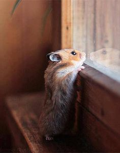 This little guy reminds me of a Breatrix Potter storybook character.  Beatrix Potter drawing come to life... adorable.