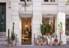 <p>At Trendland we Love Cactus! And when a concept store opens with only cacti we are already fan! Kaktus København is Denmark's first concept store for cacti and succulents. At Kaktus København