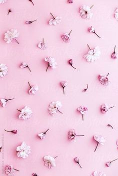 pastel pink wallpaper cherry blossom background by black united pastel pink wallpaper pastel pink wallpaper designs Wallpaper Tumblr Lockscreen, Phone Wallpaper Images, Cool Wallpaper, Pinky Wallpaper, Spring Wallpaper, Wallpaper Designs, Black Wallpaper, Pastel Pink Wallpaper, Cherry Blossom Wallpaper Iphone