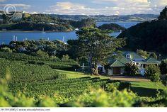 Goldwater Estate, Waiheke, New Zealand Waiheke Island, Has Gone, Auckland, New Zealand, Vineyard, River, Adventure, Mansions, Architecture