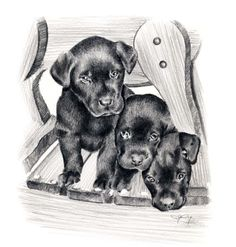 So cute! BLACK LAB PUPPIES Dog Pencil Drawing ART Print by k9artgallery, $12.50