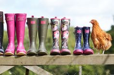 Joules wells available in store and online www.oldrids.co.uk #joules #wellies #gardening